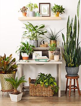 Online Salon Bitkileri Atölyesi